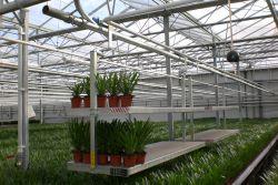 Potplantenlorrie